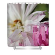 Aster Pink Shower Curtain