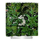 Asters And Fringed Grass-of-parnassus And Red Monkeyflowers On Highline Trail In Glacier National Pa Shower Curtain