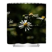 Aster's Branch Shower Curtain