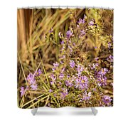 Asters In Autumn Shower Curtain