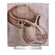 Astralopithecus Afarensis Cranium Shower Curtain