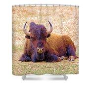 A Buffalo Staring Shower Curtain