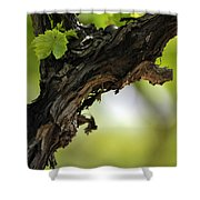 At Lachish Vineyard Shower Curtain