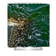 At The Pier Shower Curtain