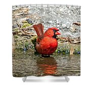 At Water's Edge Shower Curtain