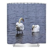 At Your Service. Mute Swan Shower Curtain