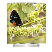 Atala Shower Curtain