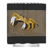 An Atlantic Ghost Crab Playing In The Tide 3 Shower Curtain