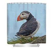 Atlantic Puffin Shower Curtain