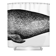 Atlantic Right Whale Shower Curtain