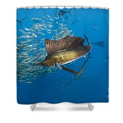 Atlantic Sailfish Hunting Shower Curtain