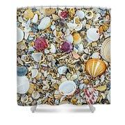 Atlantic' Shells Color Shower Curtain