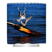 Atop A Tern Shower Curtain