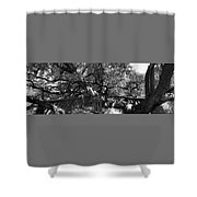 Attack Of The Oak Shower Curtain