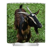 Attractive Goat Standing In A Grass Field On A Farm Shower Curtain