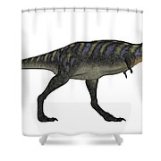 Aucasaurus Dinosaur Isolated On White Shower Curtain