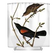 Audubon: Blackbird Shower Curtain
