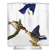 Audubon: Bluebird Shower Curtain