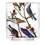 Audubon: Bluebirds Shower Curtain