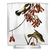 Audubon: Bobolink Shower Curtain
