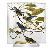 Audubon: Bunting, 1827-38 Shower Curtain