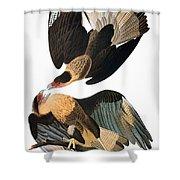 Audubon: Caracara, 1827-38 Shower Curtain