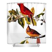 Audubon: Cardinal Shower Curtain