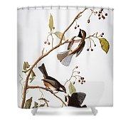 Audubon: Chickadee, (1827-1838) Shower Curtain
