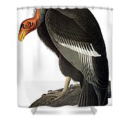 Audubon: Condor Shower Curtain