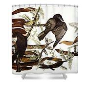 Audubon: Crow Shower Curtain