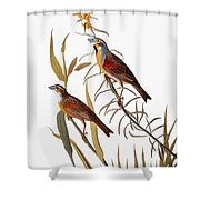 Audubon: Dickcissel Shower Curtain