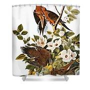 Audubon: Dove Shower Curtain