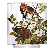 Audubon Dove Shower Curtain