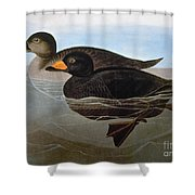 Audubon: Duck, 1827 Shower Curtain