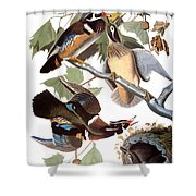 Audubon: Duck Shower Curtain