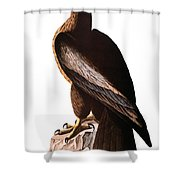 Audubon: Eagle Shower Curtain