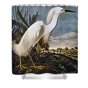 Audubon: Egret Shower Curtain