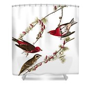 Audubon: Finch, (1827-38) Shower Curtain