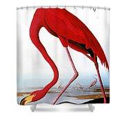 Audubon: Flamingo, 1827 Shower Curtain