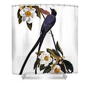Audubon Flycatcher, 1827 Shower Curtain by John James Audubon