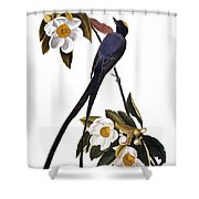 Audubon Flycatcher, 1827 Shower Curtain