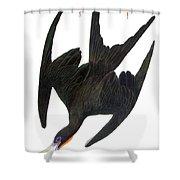 Audubon: Frigatebird Shower Curtain