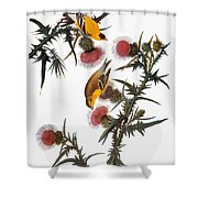Audubon: Goldfinch Shower Curtain