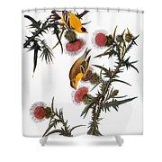 Audubon: Goldfinch Shower Curtain by Granger