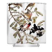 Audubon: Grosbeak Shower Curtain