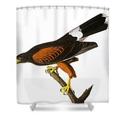Audubon: Hawk, 1827 Shower Curtain
