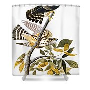 Audubon: Hawk Shower Curtain