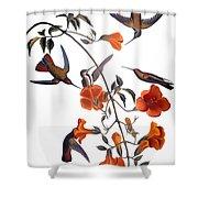 Audubon: Hummingbird Shower Curtain by Granger