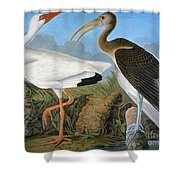 Audubon: Ibis Shower Curtain