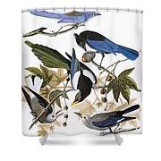 Audubon: Jay And Magpie Shower Curtain